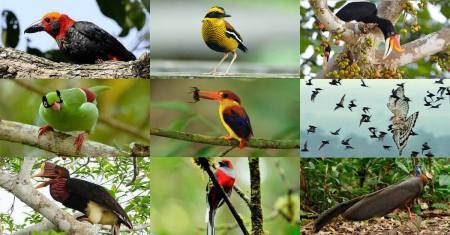 Borneo Bird Festival