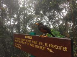 Kota-Kinabalu-climbing-4044