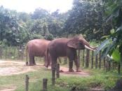㉑ロッカウイ 象